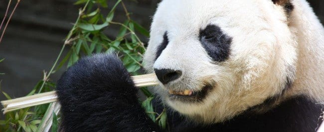 | A Post Panda SEO Checklist (Part 1)