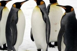 | Penguin 3.0 update and a client case study 2014 image 5